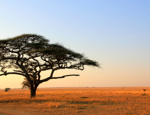 When Nat Geo Always Says…. The Serengeti National Park