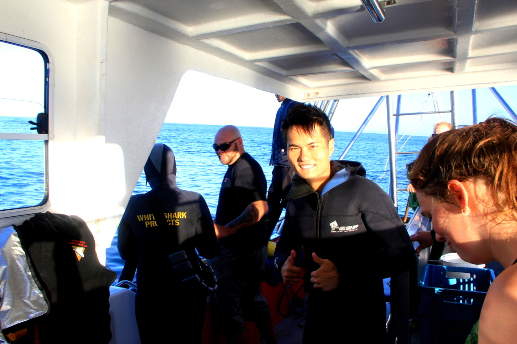 Diving with the great white shark at Gansbaai, South Africa