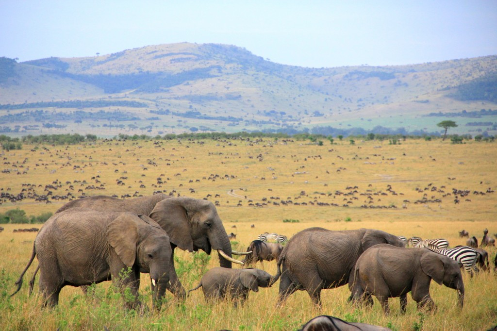 The Magnificent View in Masai Mara National Park