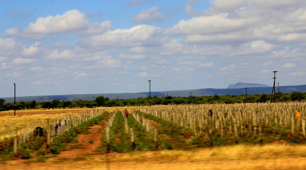 Agriculture farm in Botswana