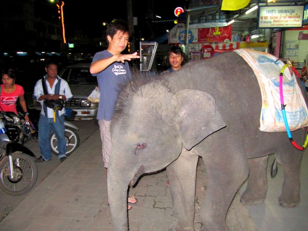 Melano afraid of the elephant