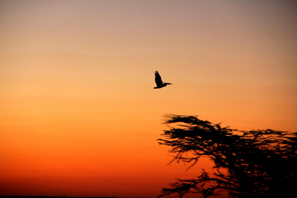 A bird with the beautiful sunset in Botswana