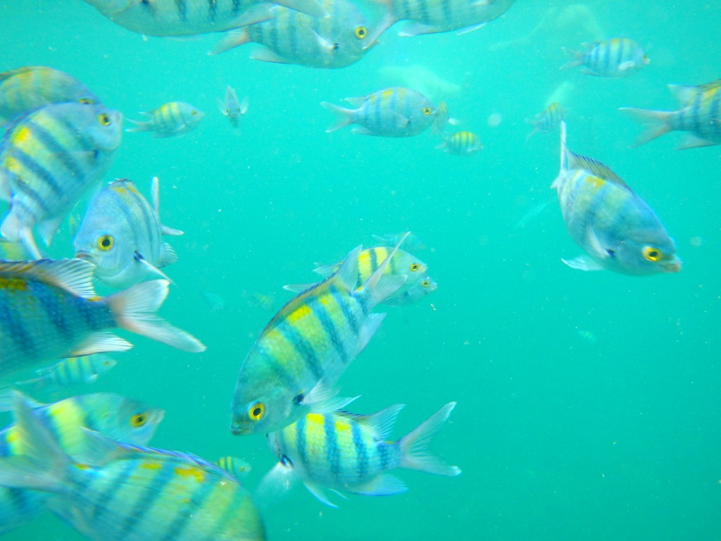 Snorkeling with the coloured fishes