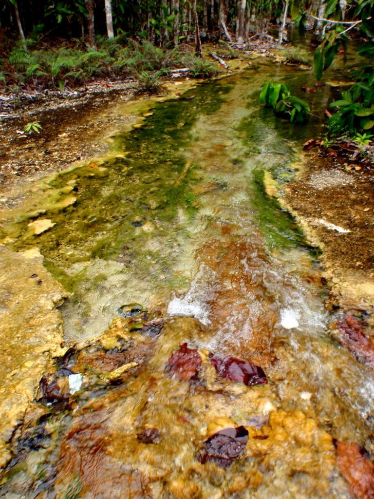Walking Path To The Emerald Pool