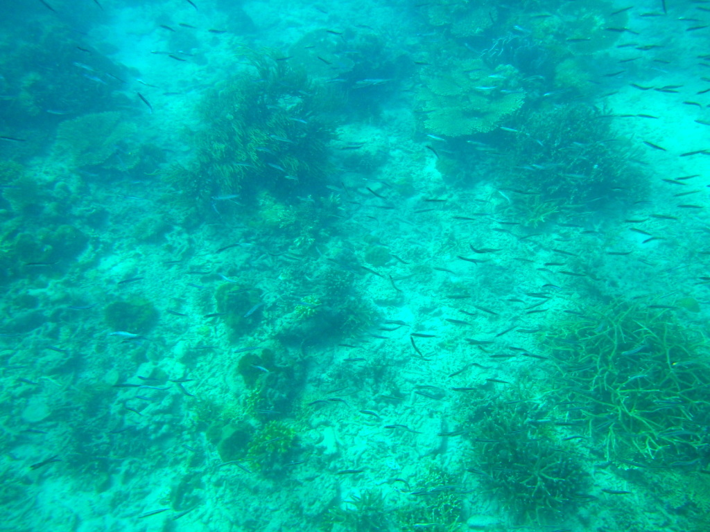 Fishes at Helicopter Island