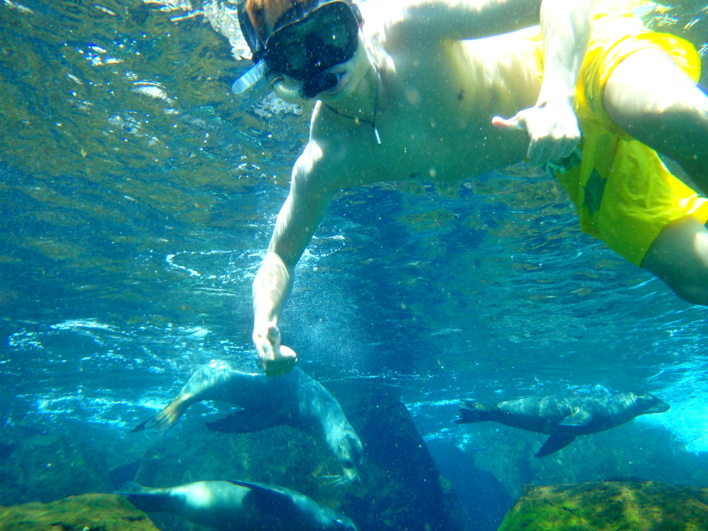 Swimming with the Sealions, Galapagos, Ecuador