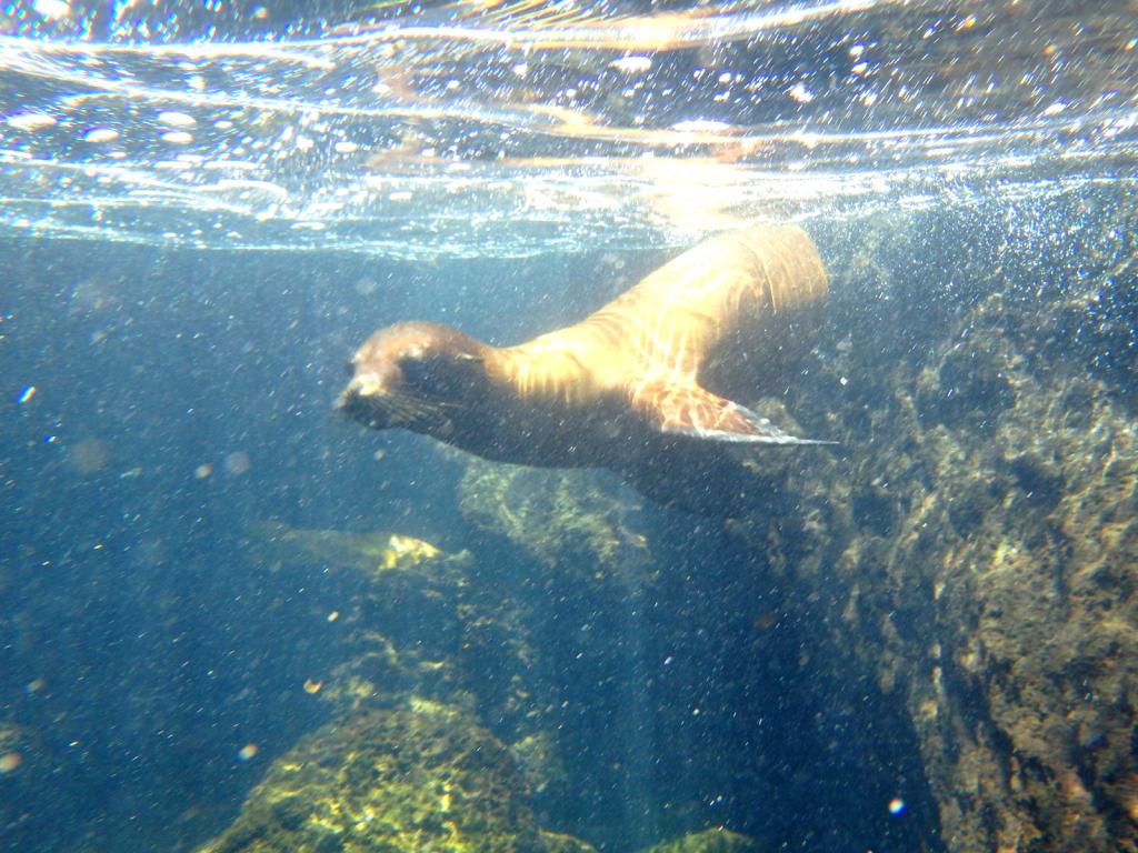 Sealions in Galapagos, Ecuador