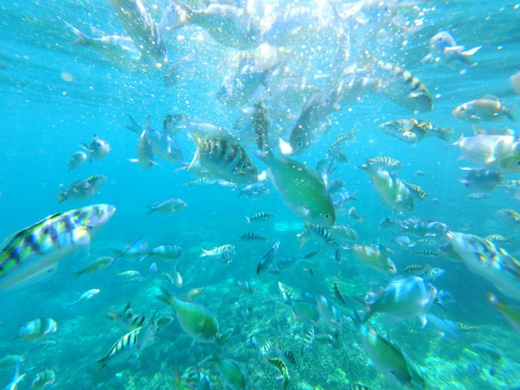 No Mola Mola??? Aiya, see tiger fish also good! :-)