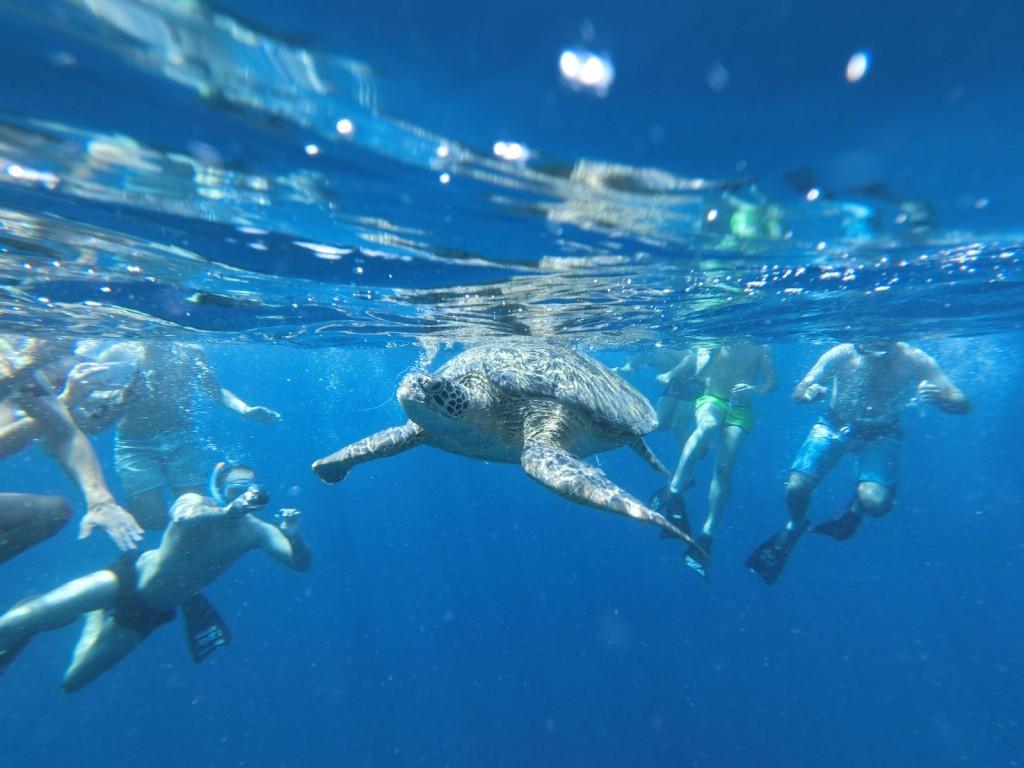 Turtles in Gili Islands