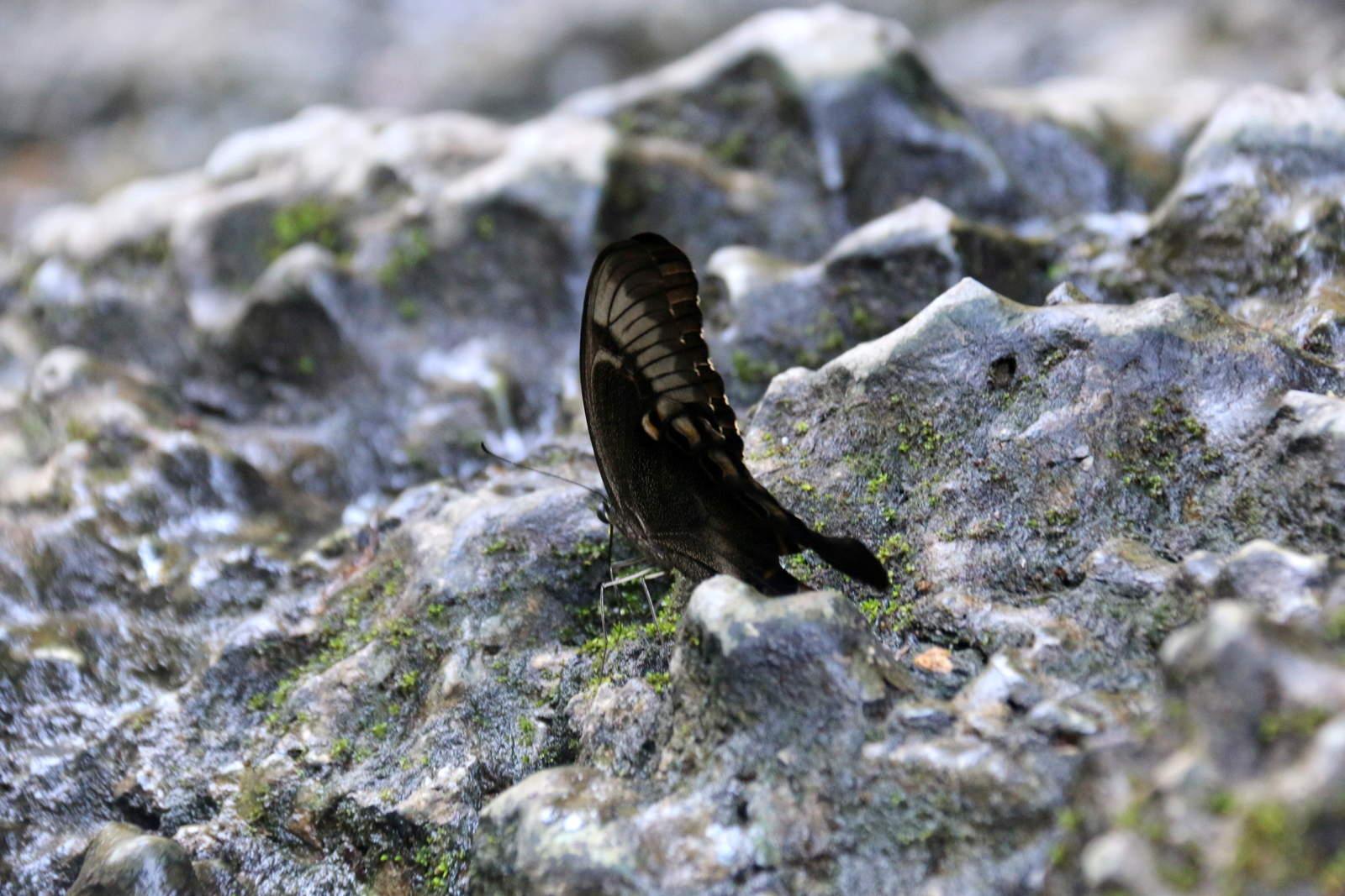 Butterfly Kingdom Bantimurung