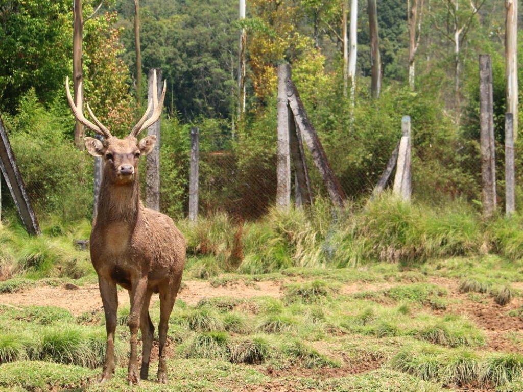 One of the things to do in Bandung, visit Ranca Upas Deer Farm