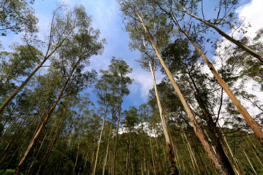 Bandung Trees