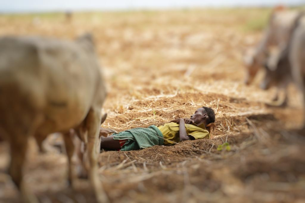 Dassanech sleeping man with his crops and cattles