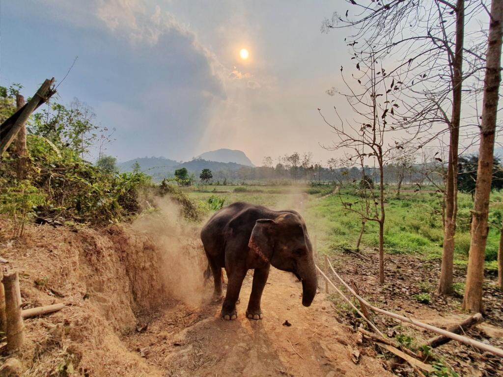 Elephant Village Sanctuary Luang Prabang
